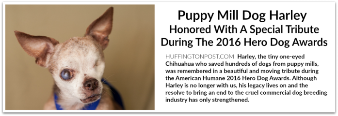 harley-tribute-2016-hero-dog-awards-huff-post