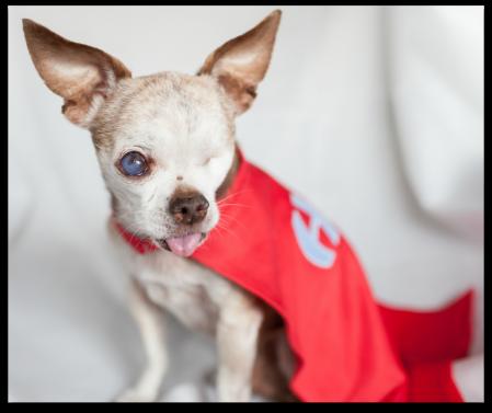 Harley in Hero Dog Cape