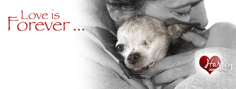 Harley facebook cover photo (1)