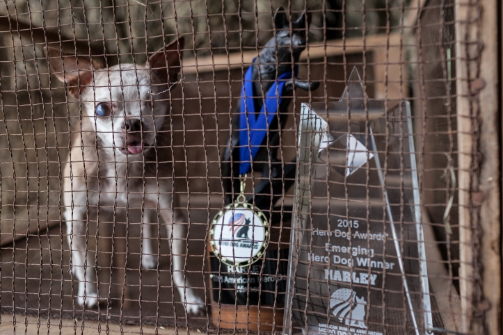 Harley in cage with awards