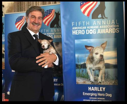 Harley and Dan at the Hero Dog Awards