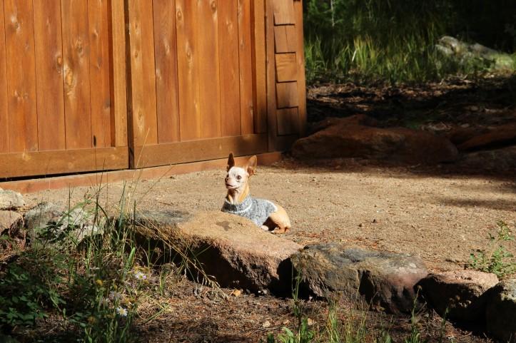 Fernando outdoors cabin exporing (5)