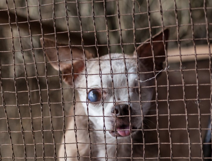 Why are puppy mills still legal?