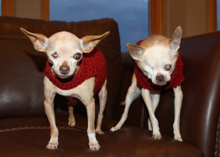 fernando-and-winston-new-sweaters-2
