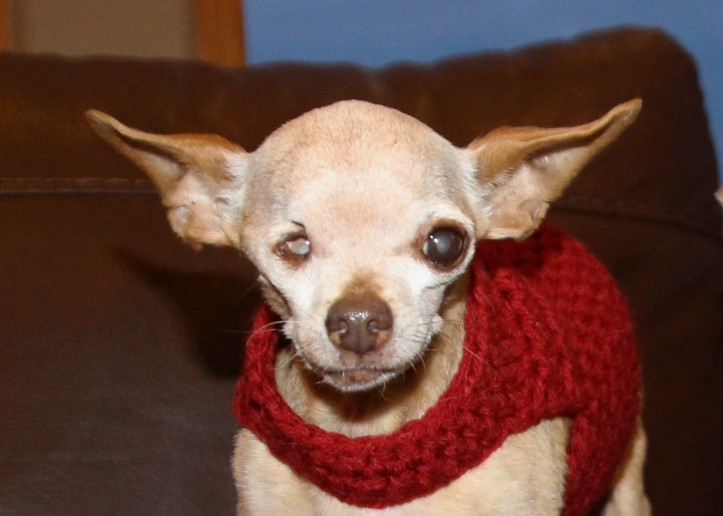 fernando-new-red-sweater-1