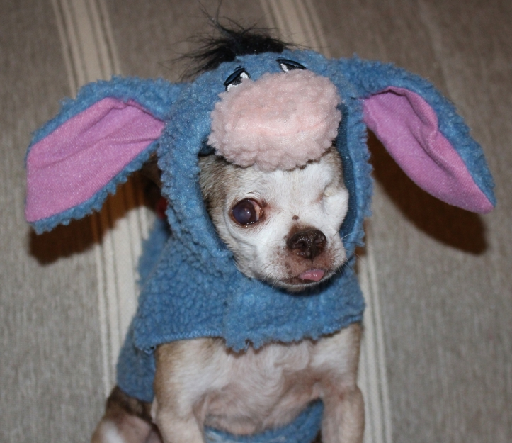 Harley as Eeyore