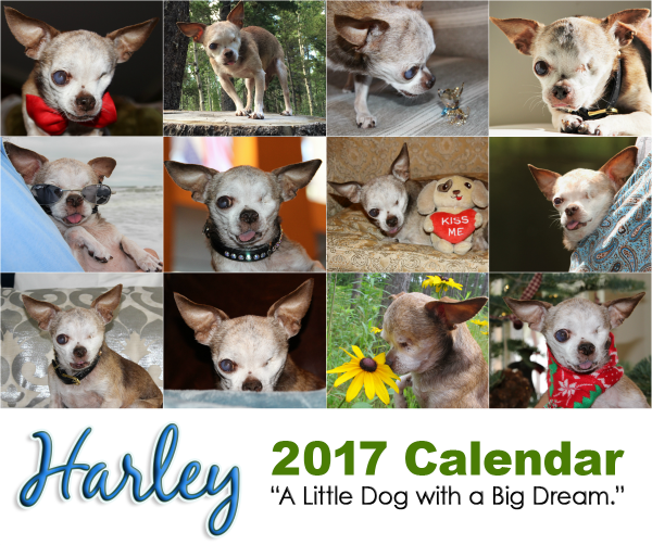 poster-harley-2017-calendar-collage