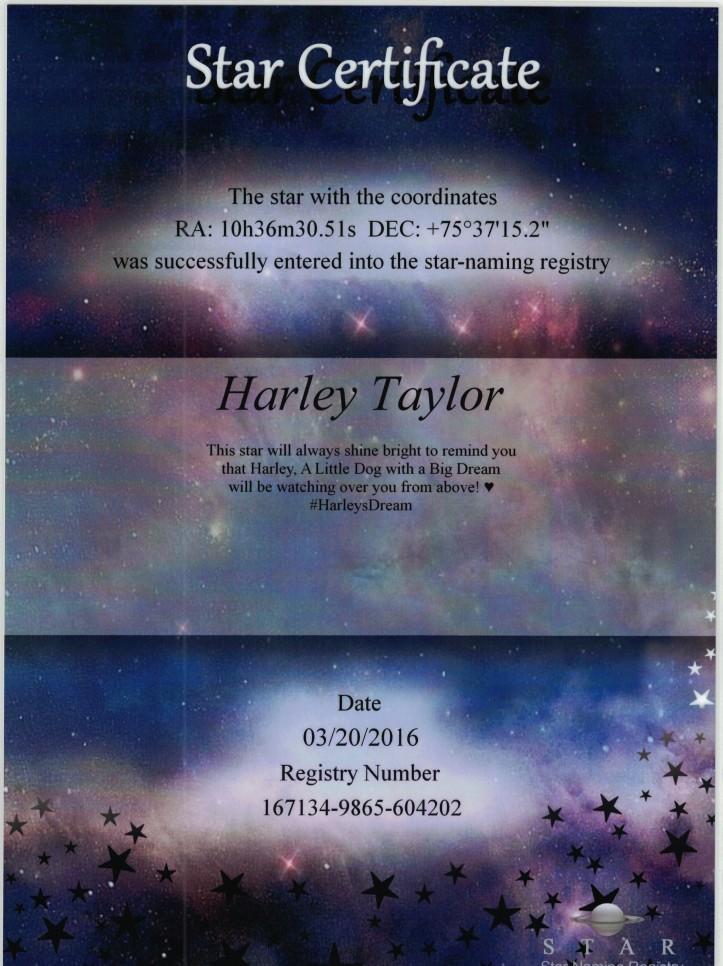 harley-star-1