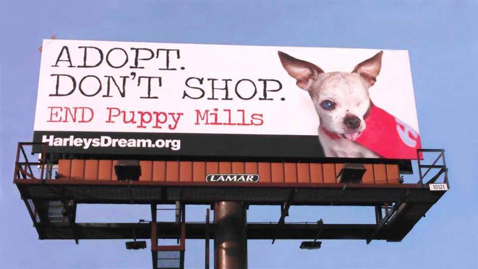 Harley S Dream Billboards In Denver Colorado Harley S Dream