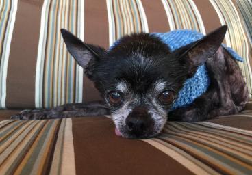 Frankie blue sweater from Debra