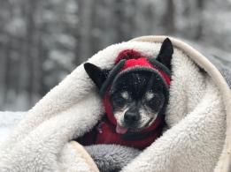 Frankie in blanket in snow 1-21-18
